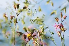 Pole rośliny Obraz Stock