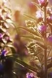 Pole rośliny Zdjęcia Royalty Free