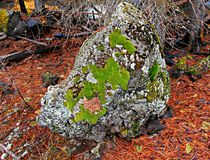 Pole Rock. Mossy rock next to Pole Creek near Sisters, OR Stock Image