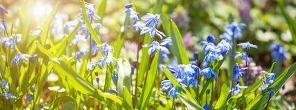 pole rozkwita wiosna Sztandaru pojęcie Zdjęcie Stock