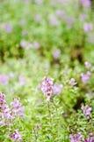 Pole storczykowy kwiat blured tło Zdjęcia Royalty Free