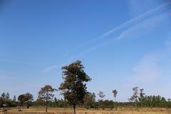 Pole suszy A bizon je trawy Zdjęcia Stock