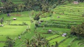 Pole tarasy blisko do góry Agung, Bali zdjęcie wideo