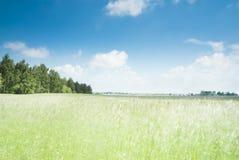 Pole uprawne i niebieskie niebo Obrazy Royalty Free