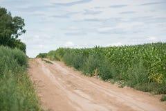 Pole uprawne i podjazd gospodarstwo rolne w wiejskim Rolniczy pole na którym r zielona kukurudza Obrazy Royalty Free