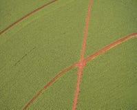 Pole uprawne plantaci roślina Zdjęcie Royalty Free