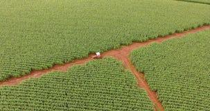 Pole uprawne plantaci rośliny antena Fotografia Royalty Free