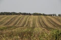 Pole w spadku po zbierać kukurudzy, zdjęcie stock