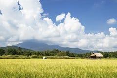 Pole w Tajlandia z bambusowym budynkiem i dużym niebem obraz royalty free