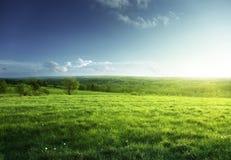 Pole wiosna las i trawa zdjęcie royalty free