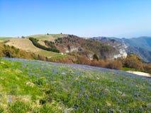 Pole wiosny pasqueflower zdjęcie royalty free