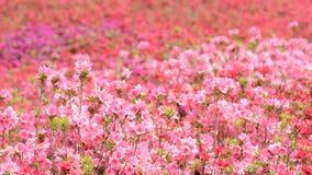 Pole wypełniający z kwiatami zbiory wideo