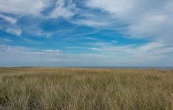 Pole wysoka trawa pod niebieskimi niebami Zdjęcia Royalty Free