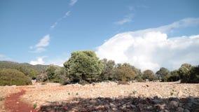 Pole z antuque drzewami oliwnymi na tle i kamieniami zbiory wideo