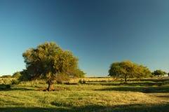 pole z gospodarstw rolnych Obrazy Stock