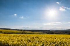 Pole z gwałtem bardzo piękny krajobraz który kwitnie, zdjęcie stock