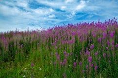 Pole z kwiatami i niebieskim niebem Obrazy Royalty Free