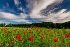 Pole z kwiatono?nymi maczkami Lato pi?kny krajobraz fotografia stock