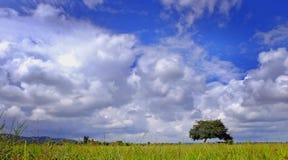Pole z niebieskim niebem obrazy royalty free