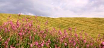 Pole z plink niebem w lecie i kwiatami zdjęcie royalty free