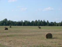 Pole z rżniętą trawą i sianem w Białoruś zdjęcia stock