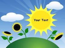 Pole z słonecznikami i słońcem Fotografia Stock