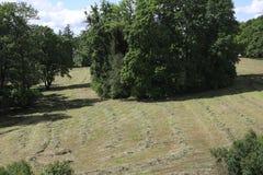 Pole z skoszoną trawą w lesie, park Widok uprawia ziemię pole z świeżo koszącą trawą teraz kłama w rzędach gotowych być colle fotografia royalty free