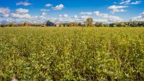 Pole z spadek jesieni Wiejskiej stajni Chmurnym niebieskim niebem fotografia royalty free