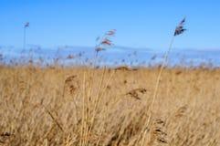 Pole z wysokiej trawy zamazanym tłem Zdjęcia Stock