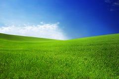 Pole z zieloną trawą i niebieskim niebem z chmurami na gospodarstwie rolnym w pięknym lato słonecznym dniu Czysty, idylliczny, kr obraz royalty free