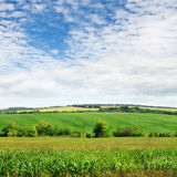 Pole z zielonymi roślinami i niebem Fotografia Stock