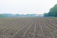 Pole zasadzający z kukurudzą Obrazy Stock