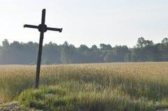 pole ziarna Dojrzenie ucho Zbiera i groszkuje w mąkę farms obraz royalty free