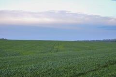 Pole zielona trawa przeciw niebieskiemu niebu Zdjęcia Royalty Free