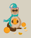 The polecat eats ripe tangerines Stock Images