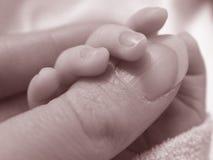Polegar das senhoras da terra arrendada do bebê Imagem de Stock