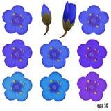 Polemonium caeruleum. Greek Valerian - perennial herbaceous medi Royalty Free Stock Image