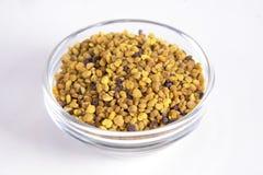 polen Foto de archivo libre de regalías