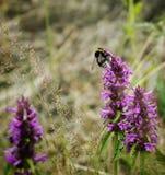 polen Imagen de archivo libre de regalías