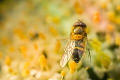 Polen de la abeja el polen en una flor en un jardín Fotos de archivo