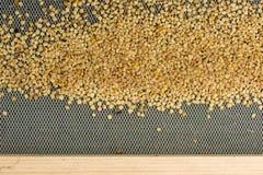 Polen de la abeja en la colmena Fotos de archivo