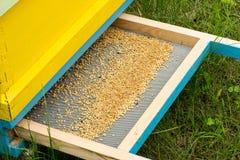 Polen de la abeja en la colmena Fotografía de archivo