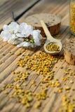 Polen de la abeja en una cuchara de madera y flores de los árboles de la primavera Apitherapy Productos de la abeja Fotografía de archivo libre de regalías