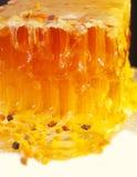 Polen fresco de oro del panal y de la abeja.  cierre para arriba Imágenes de archivo libres de regalías