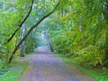 polen Goldherbst Einige Bäume und Blätter stockfotografie