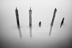 Polen in het water - stilteconcept Royalty-vrije Stock Foto's