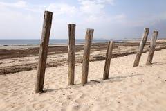 Polen in het zand Stock Foto's