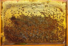 Polen, néctar y miel en peines Imágenes de archivo libres de regalías
