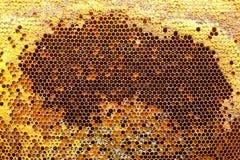 Polen, néctar y miel en peines Imagenes de archivo