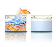 polepszać rybiego złocistego chodzenie strona internetowa Fotografia Stock